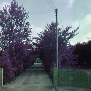 Chlorophyll fluorescence captured by Google Streetview camera cars with broken filters