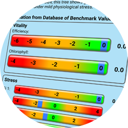 Arborcheck | Pre-visual detection of many forms of biotic and abiotic stress factors