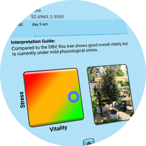 Arborcheck | Clear, intuitive presentation of results with interpretation guide